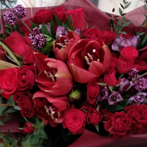 190 амарилис,нобилис, роза фридом, роза куст