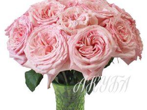 Роза садовая Пинк Охара парфюмированная