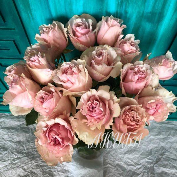 Розы парфюмированные розовые