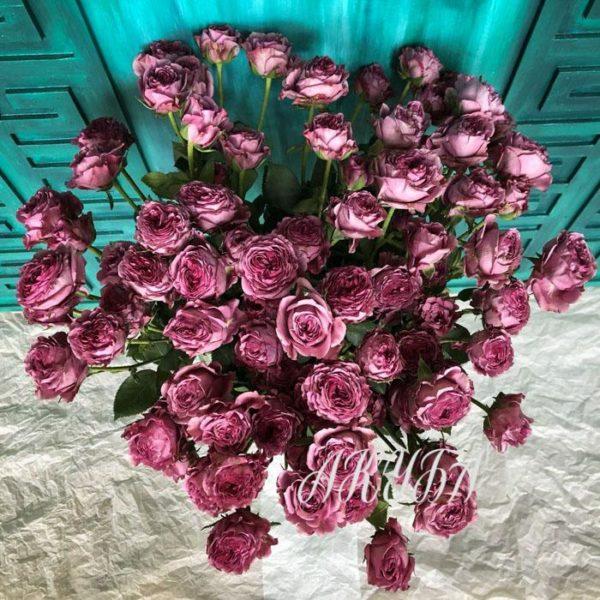 Роза кустовая Хайп 4
