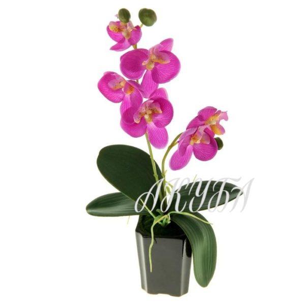 Орхидеи в горшках в ассортименте