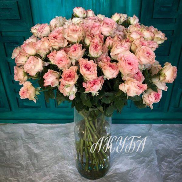 Роза кустовая садовая бело-розовая 4
