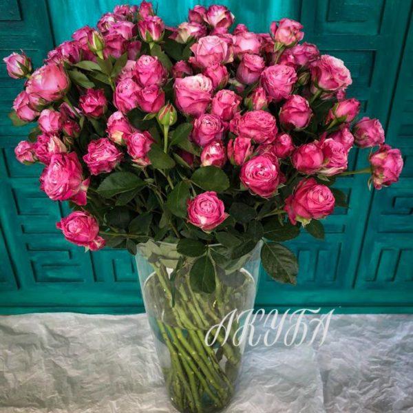 Роза кустовая садовая Бомбастик 4