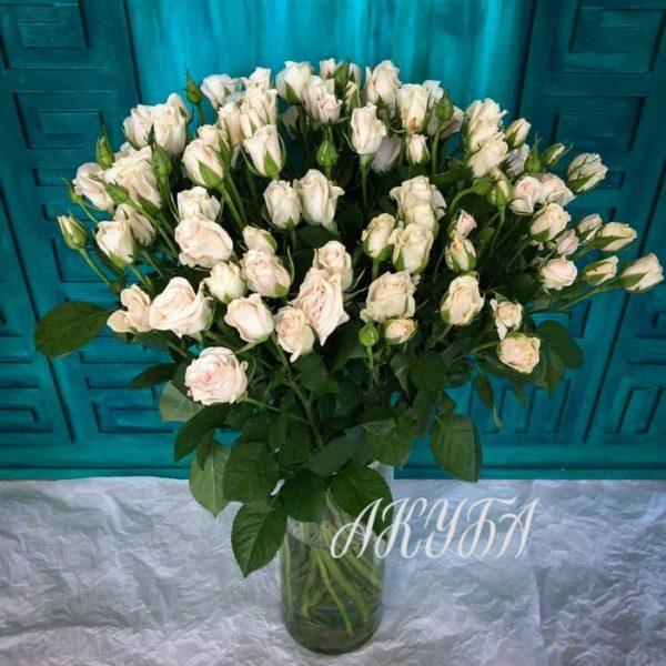 Роза кустовая обычная белая 4