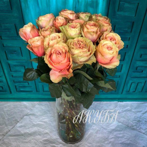 Роза садовая Кахала розово-зелёная 4