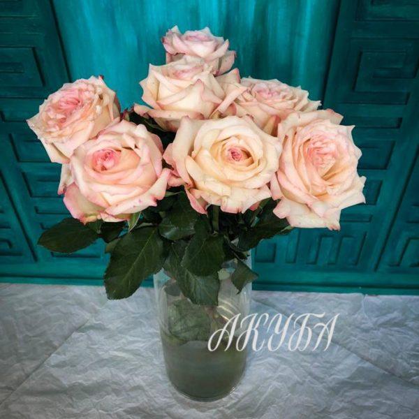Роза Джойс парфюмированая 4