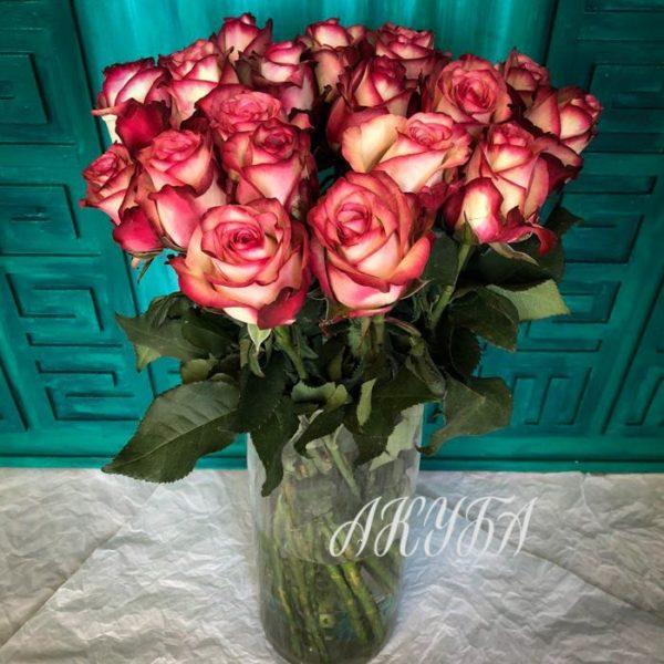 Красно-белая роза 4