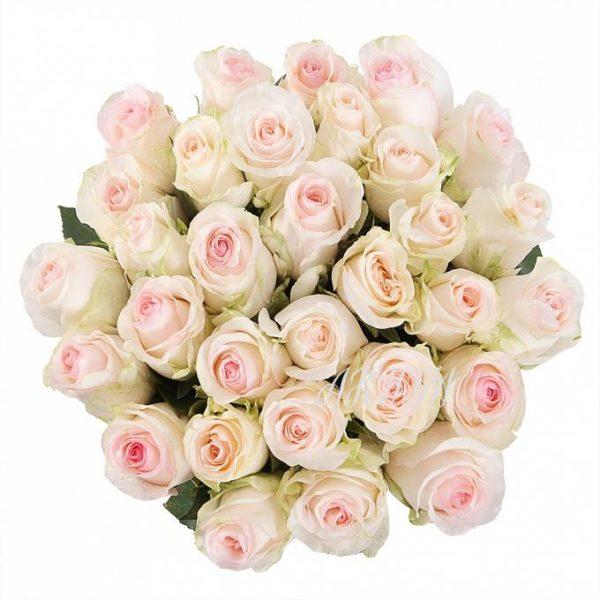 Роза Сеньерита 2