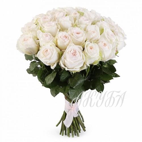 Роза садовая пионовидная Вайт О'Хара парфюмированная