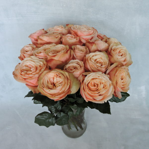 Роза пионовидная «Кахала» фото 3