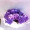 Гортензия фиолетовая фото 3