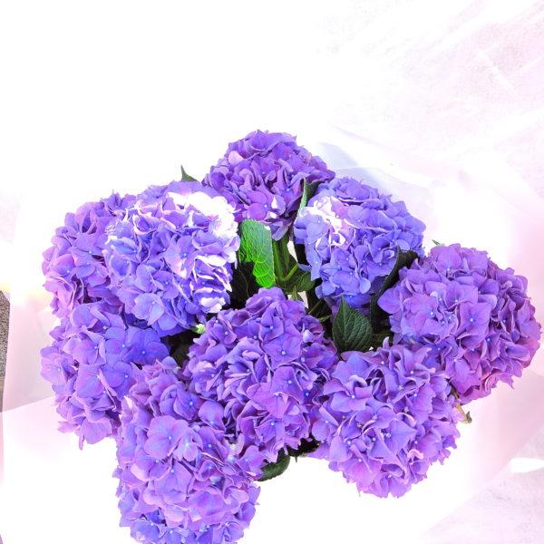 Гортензия фиолетовая фото 2