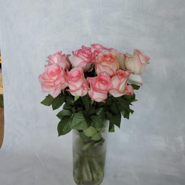 Роза нежно-розовая Кения 5