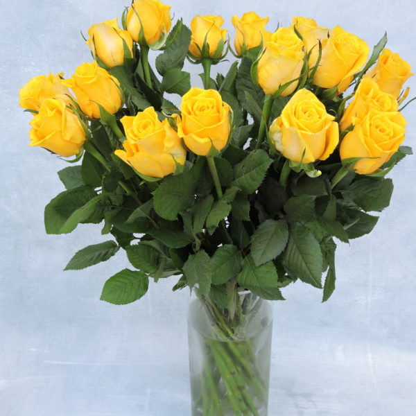 Роза желтая Кения 4