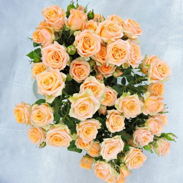 Роза кутовая нежно-персиковая Кения 5