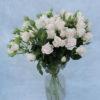 Роза кустовая бело-кремовая Кения 2