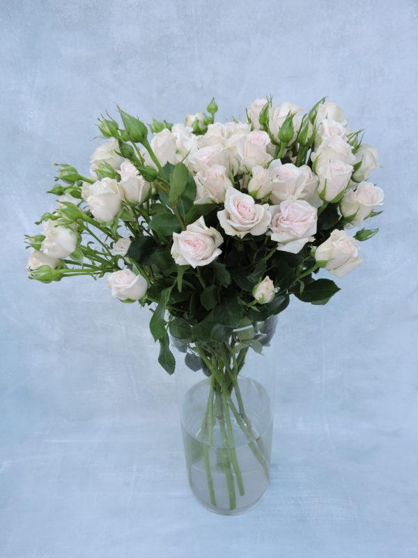 Роза кустовая бело-кремовая Кения 4