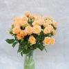 Роза кутовая нежно-персиковая Кения 2
