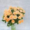 Роза кутовая нежно-персиковая Кения