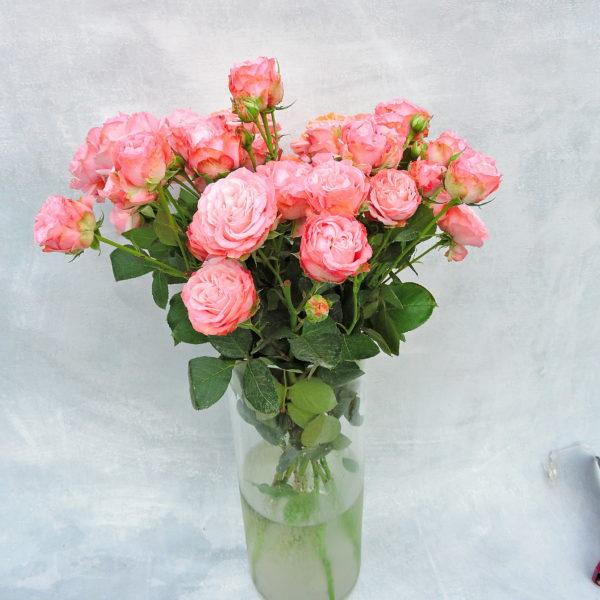 Роза кустовая нежно-розовая Кения