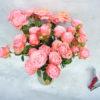 Роза кустовая нежно-розовая Кения 4
