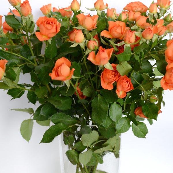 6.5 Роза кус Бэйби