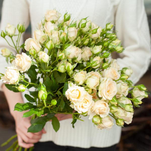 роза куст Крем Грация 7,00 — копия