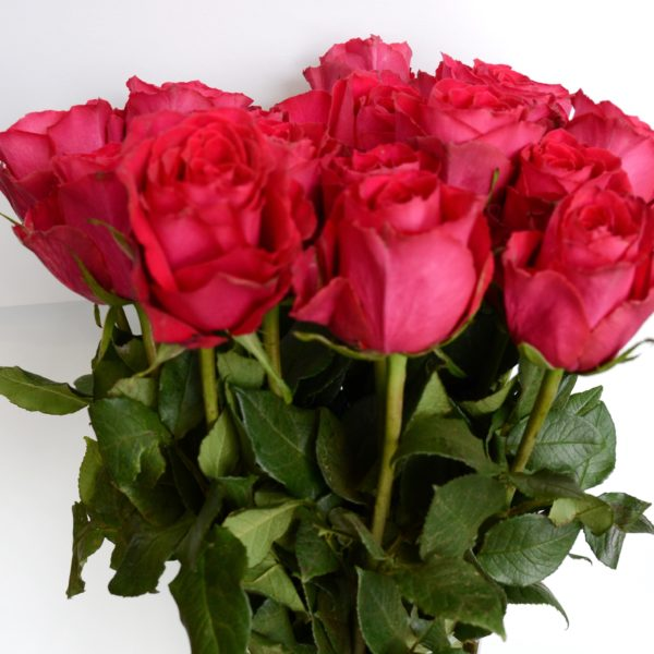 роза родос 5,5