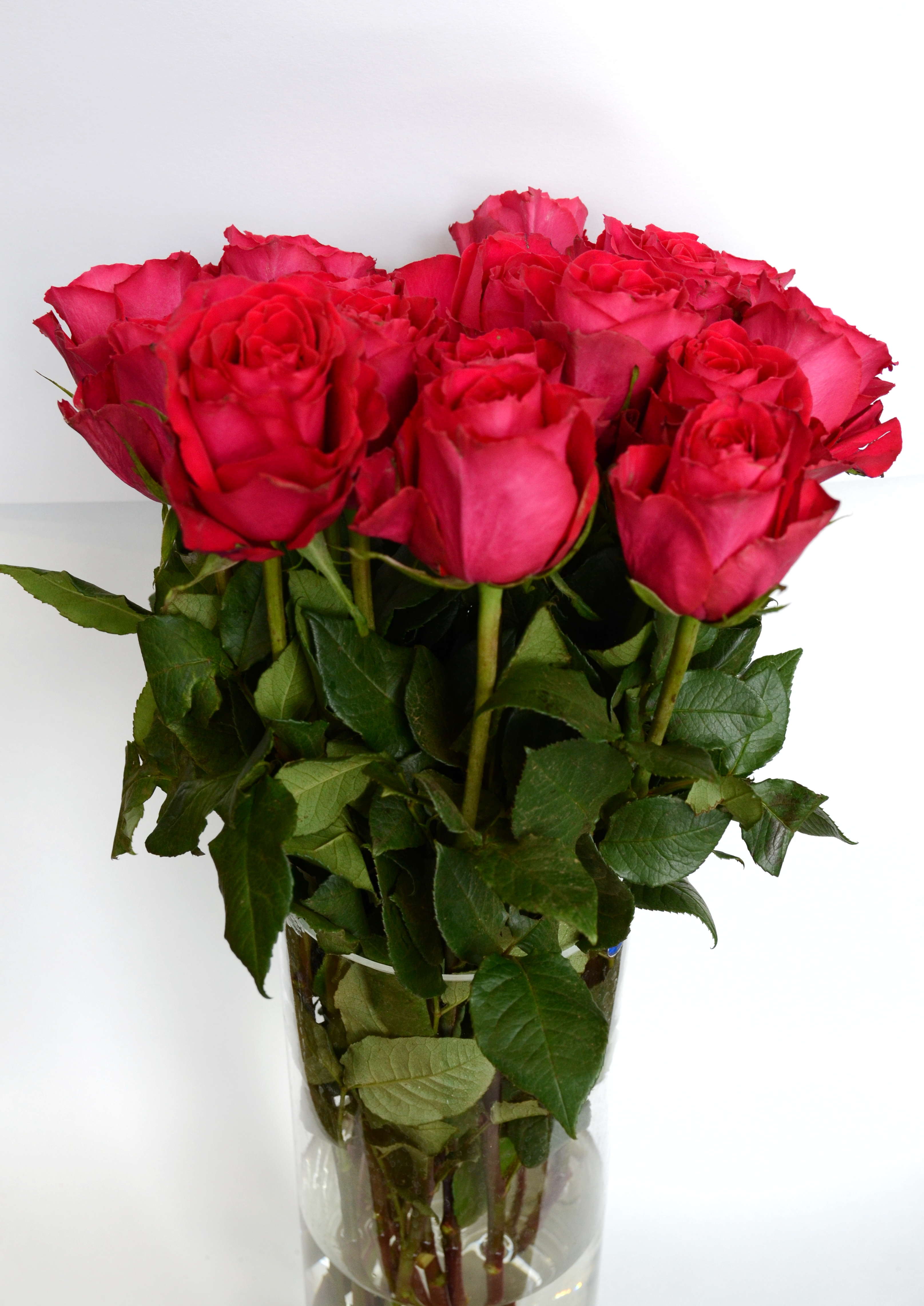 роза родос