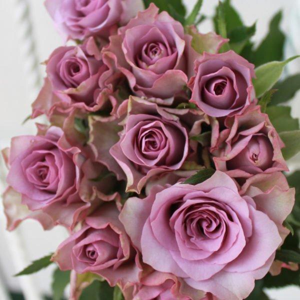 151-special-rose-nightingale-purple-jpeg