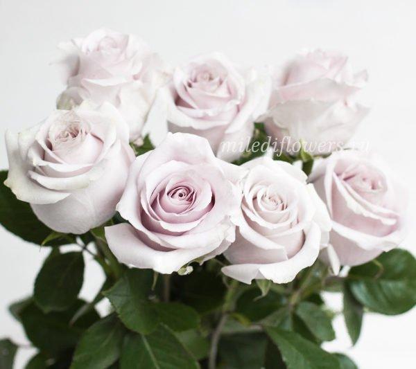 miledi-safi-rose-white-600×533